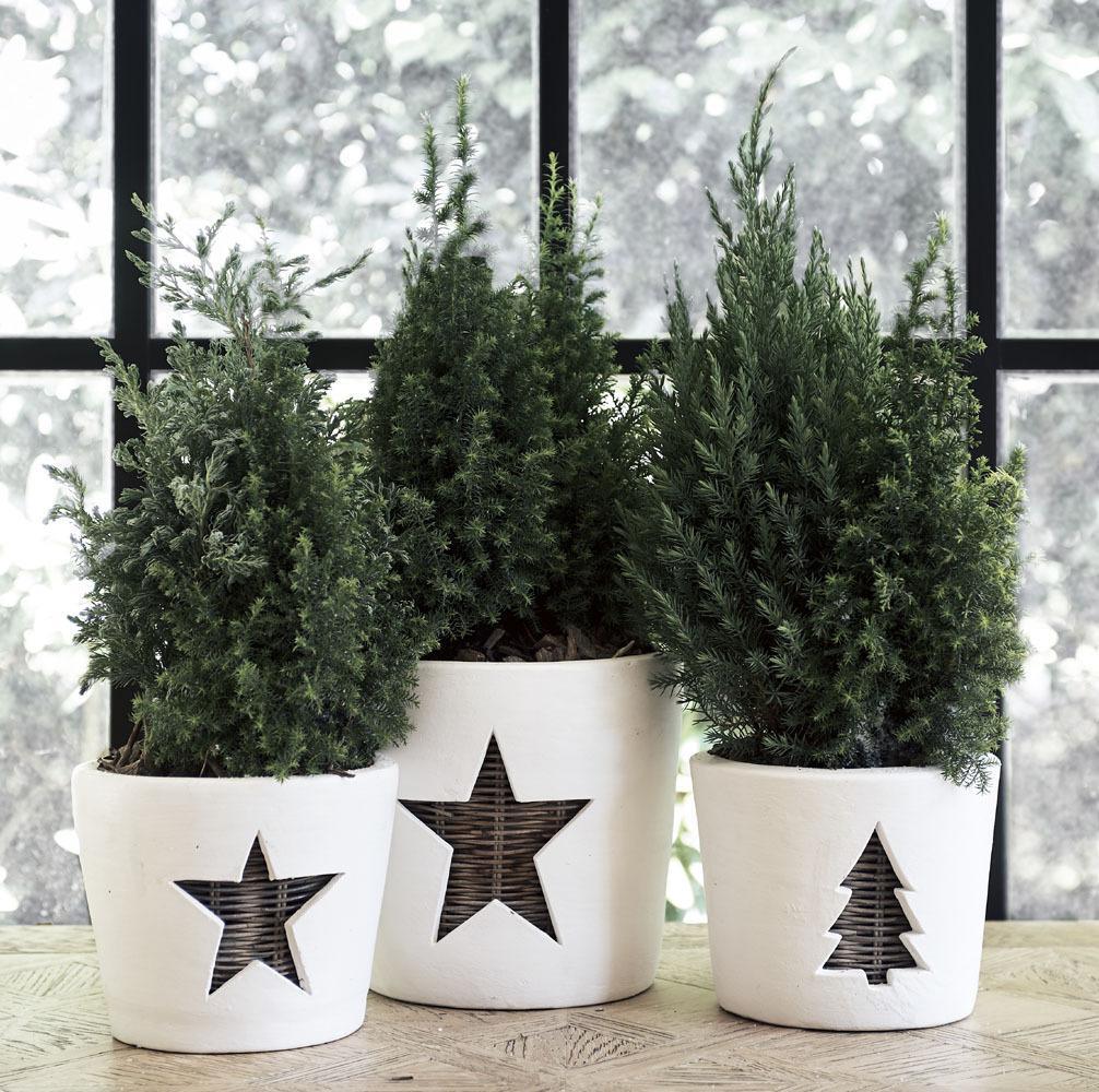 Winter Star Pot L Riviera Maison